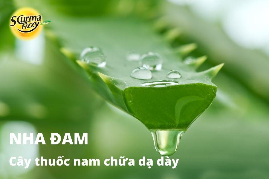 cay-thuoc-nam-chua-da-day-7