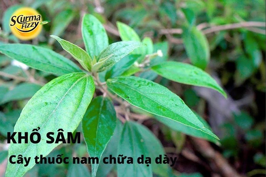 cay-thuoc-nam-chua-da-day-12