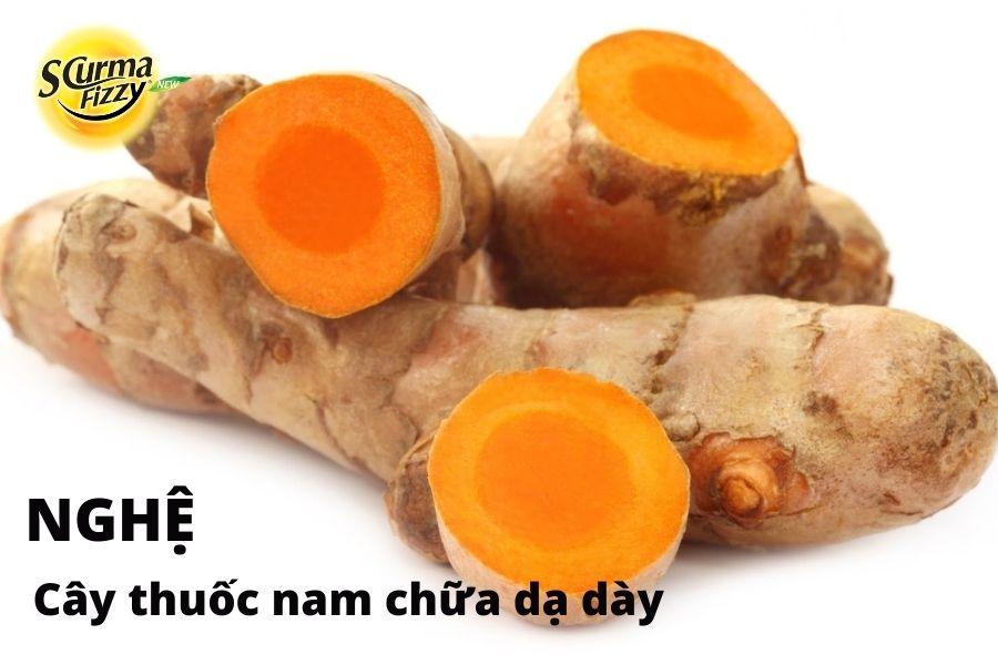 cay-thuoc-nam-chua-da-day-13