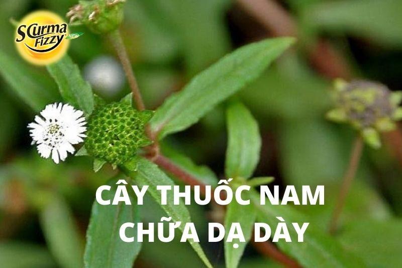 cay-thuoc-nam-chua-da-day