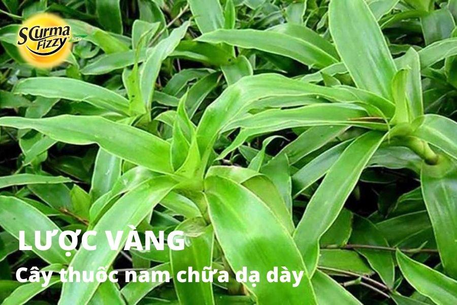 cay-thuoc-nam-chua-da-day-11