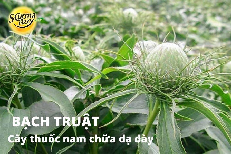 cay-thuoc-nam-chua-da-day-9