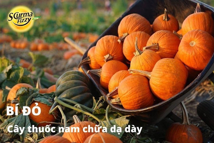 cay-thuoc-nam-chua-da-day-10