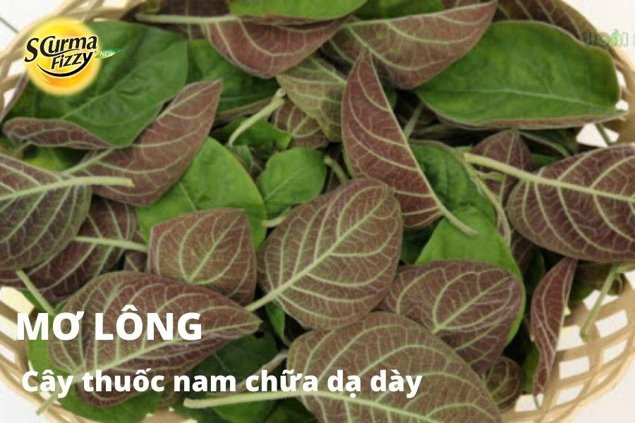 cay-thuoc-nam-chua-da-day-16