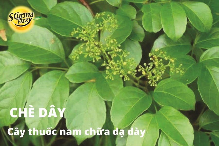cay-thuoc-nam-chua-da-day-15