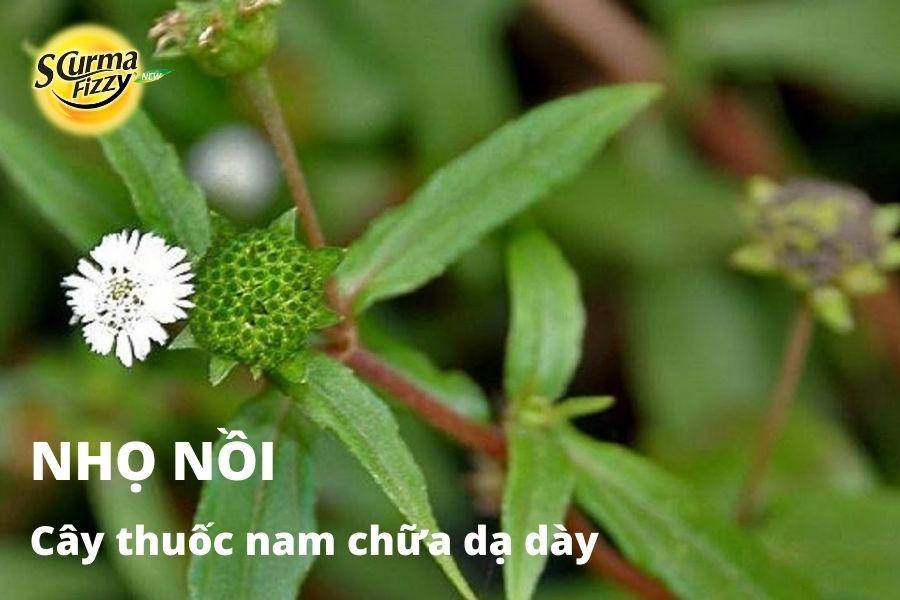 cay-thuoc-nam-chua-da-day-4