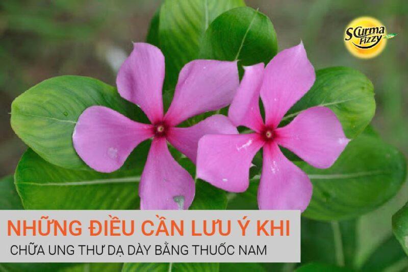 chua-ung-thu-da-day-bang-thuoc-nam-10