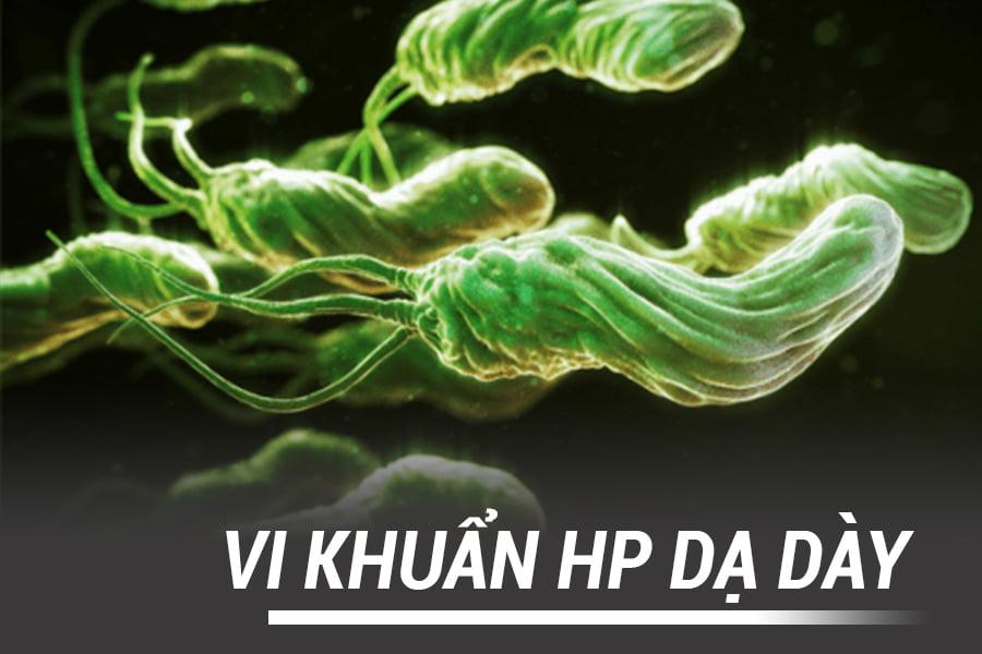 vi_khuan_hp2