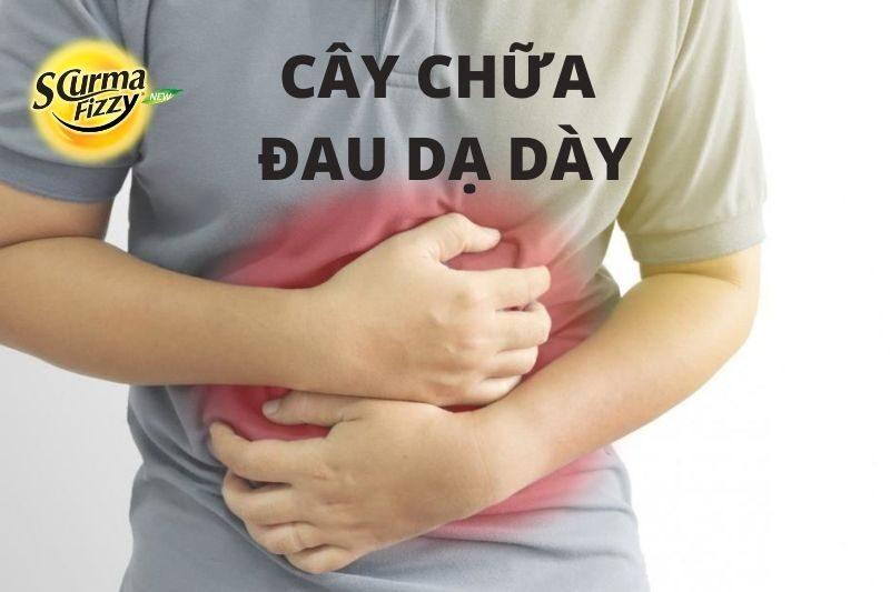 cay-chua-dau-da-day
