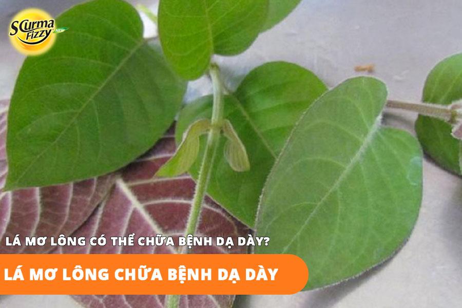 la-mo-long-chua-dau-da-day-co-hieu-qua