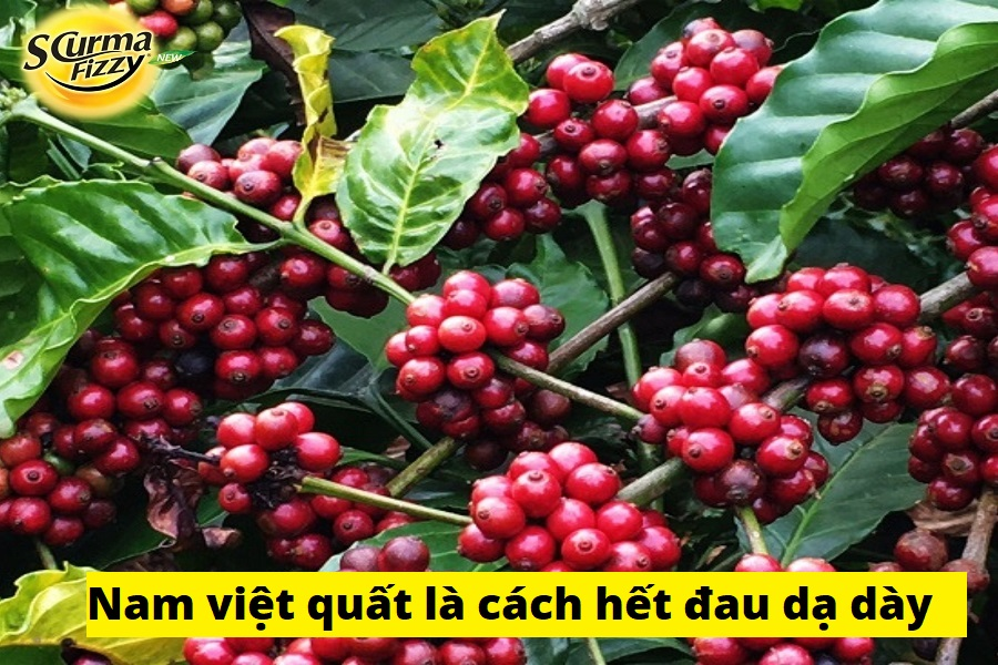 nam-viet-quat-là-cach-het-dau-da-day