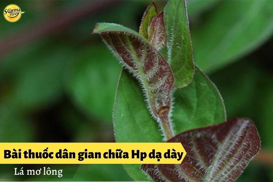 bai-thuoc-dan-gian-chua-hp-da-day2