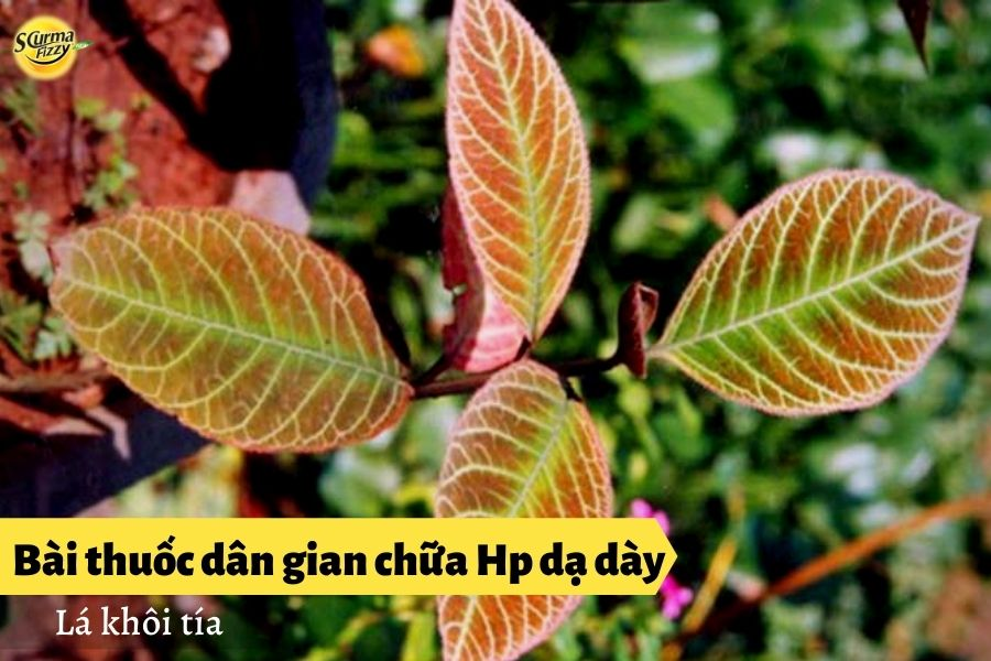 bai-thuoc-dan-gian-chua-hp-da-day4