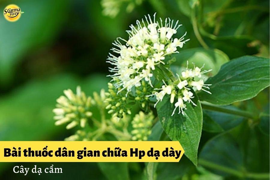 bai-thuoc-dan-gian-chua-hp-da-day5
