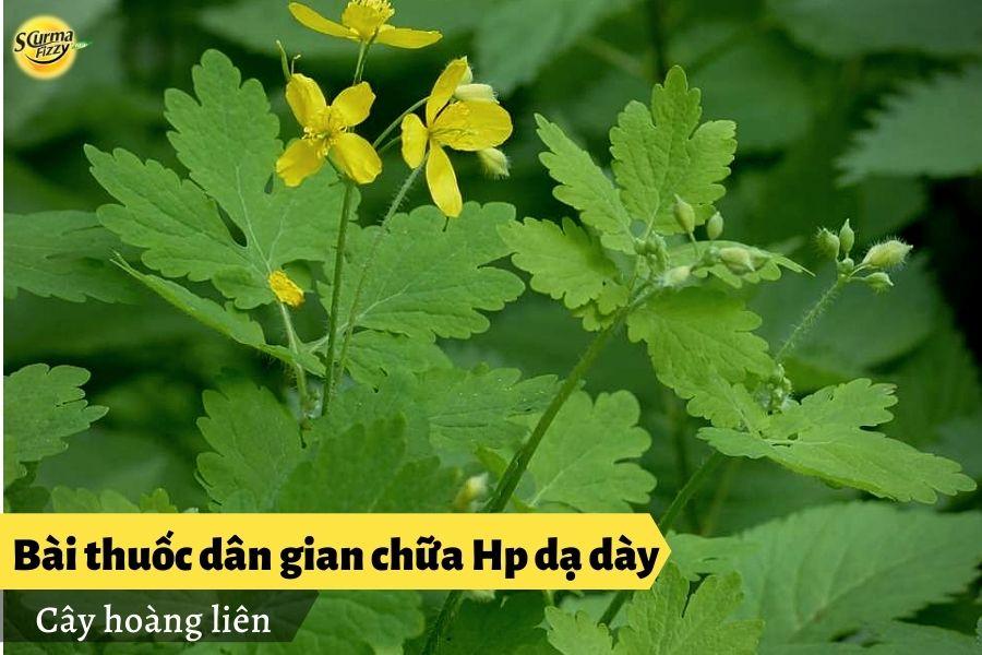 bai-thuoc-dan-gian-chua-hp-da-day6